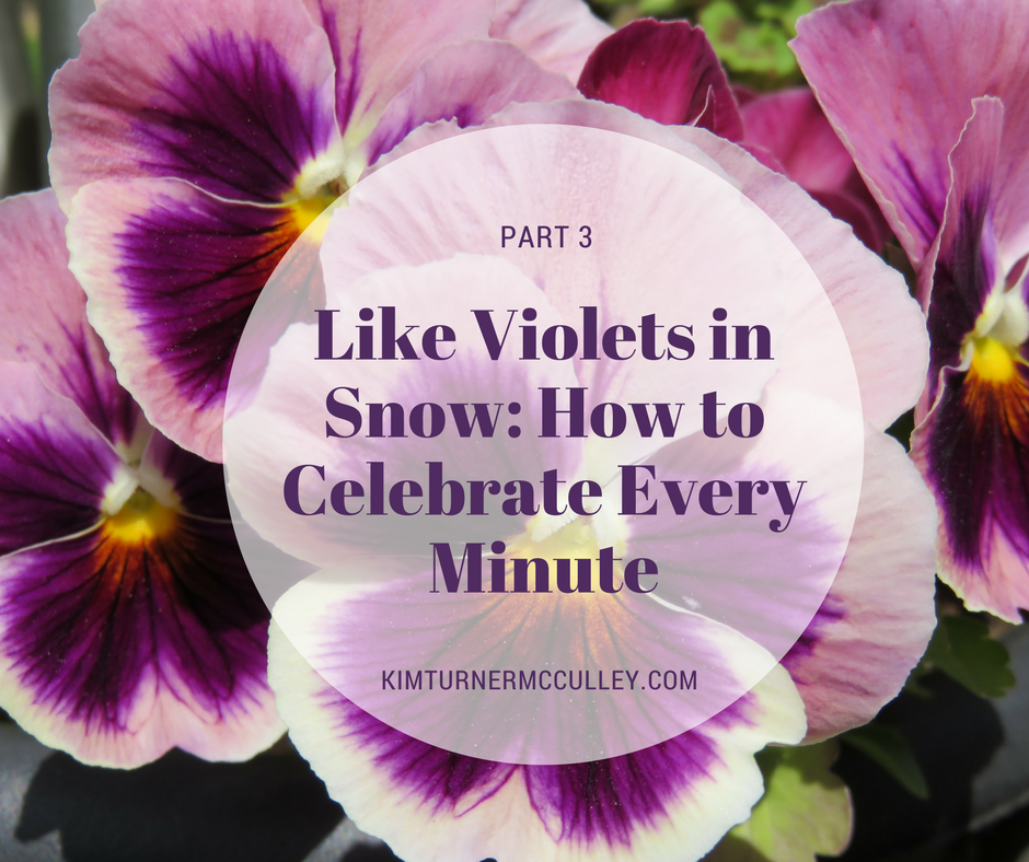 Like Violets in Snow: How to Celebrate Every Day KimTurnerMcCulley.com